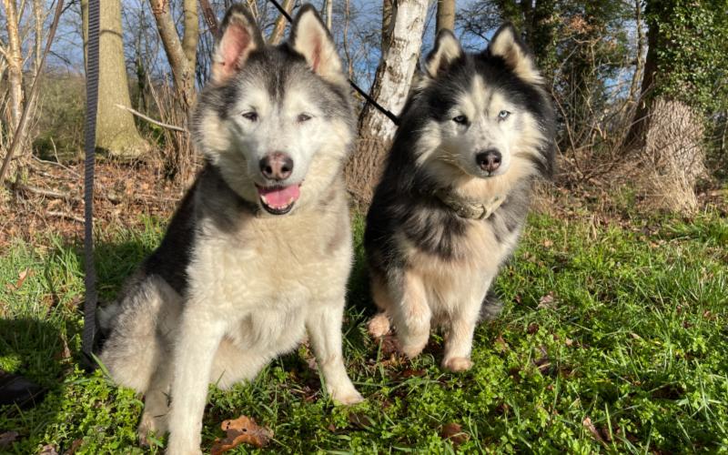 Jessy en Snowy